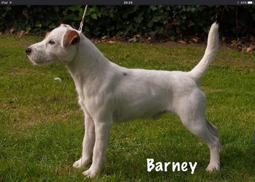 barney_500x358.jpg