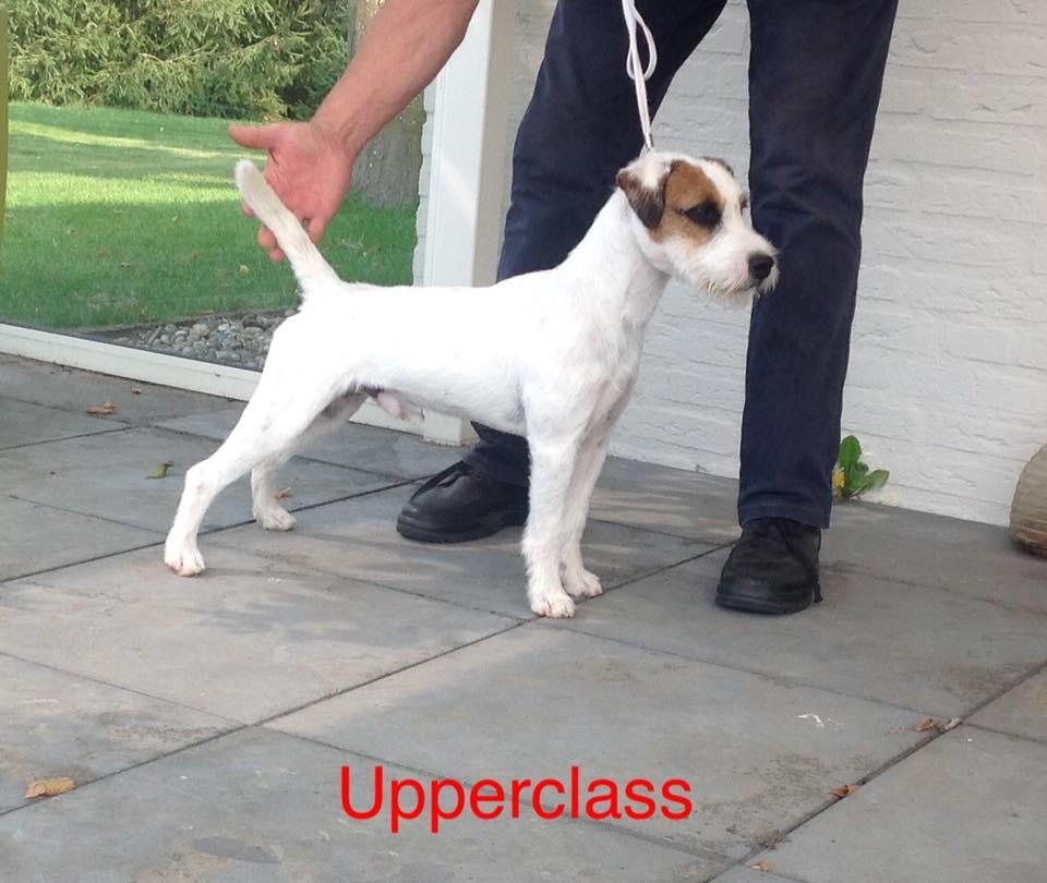 Upper Class a Prescindere